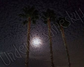 Cloudy moonlight and palm trees,  Cloudy sky at night, Winter's night