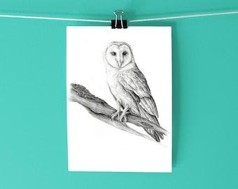 Barn Owl Art Print / Hand-drawn graphite scientific illustration / Black and white drawing print