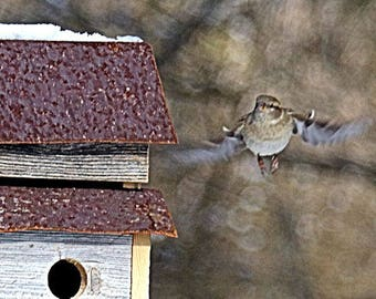 """Fine Abstract Art """"Nearing Home"""" An Oil Painting Through The Camera Lens Photography By Scott D Van Osdol Wildlife Photograph Nature Print"""