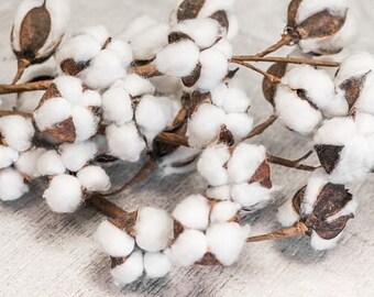 Cotton Stems/Sprays, 2nd Aniversary,Wedding, Raw Cotton, Home Decor, Rustic Decor, Farmhouse Decor HGTV,