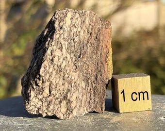 Dinosaur Bone, Cretaceous - FST085