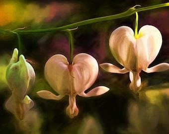 Flower Print, Flower Art, Flower Painting, Fine Art Prints, Bleeding Hearts, White Flowers, Garden Art, Large Art Prints,Flower Photography