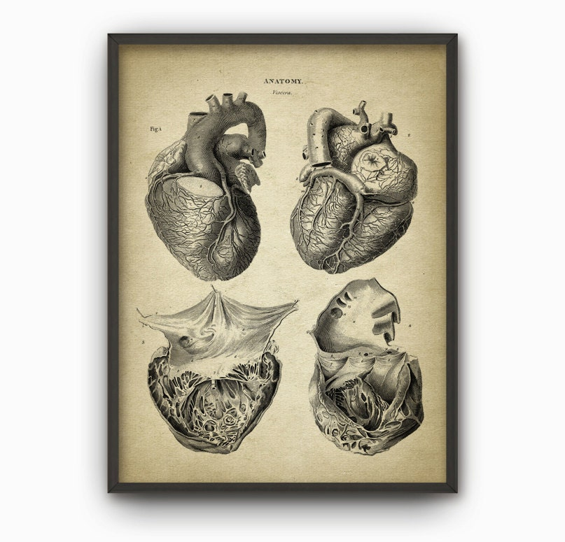 Heart Anatomy Art Poster 2 Vintage Heart Book Plate