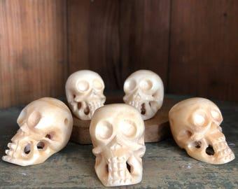 Water Buffalo Skull Carved Skull Dia De Los Muertos Skull Ancestor Altar Real Bone Skull Witchy Decor Ancestor Altar
