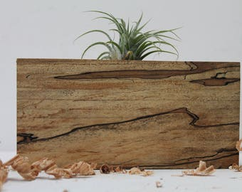 Reclaimed Spalted Maple Air Plant holder  M 018