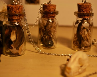 Natural History Curiosity Bottle necklaces, collections of flora, fauna treasures ,snake shed,teeth, claws, flowers, silver chain,terrarium