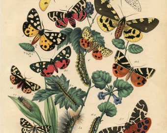 Butterflies, Botanical Print, Bohemian Decor, Nature Print, Butterfly Print, Natural History Print, Antique Botanical Prints, Boho Decor