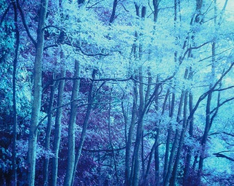 Dreamy Blue Forest, Enchanted Forest, Surreal Art, Forest Pictures, Blue Trees Print, Dreamy Trees, Ethereal Art, Dreamy Photography, Blue