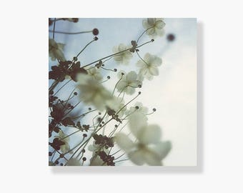 Flower photo canvas, japanese anenomes, pale blue, white, garden flowers, nature photography, flower canvas wall art - Just As You Are