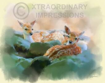 Original Art, ACEO, Deer, Fawn, The Nursery