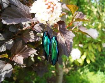 Bronze Earrings with Jewel Beetle Wings (Elytra)