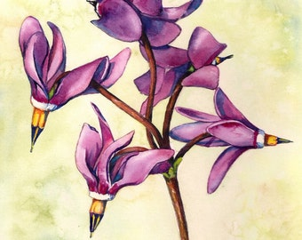 Shooting Stars Facing Outward ORIGINAL watercolor painting 8x10 pink wildflower nature flower spring Montana bloom by Christy Sheeler