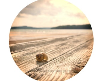 Shabby Chic Wall Decor Seashell Photo Beach Photo Pink and Peach Still Life Picture Round Image on an 8x10 inch Photography Print Alone