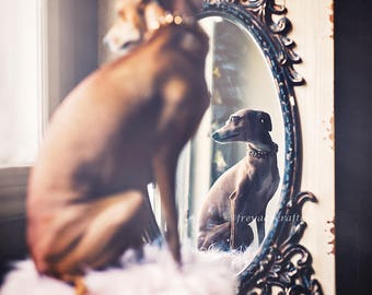 Freya Ever After dog photography Italian Greyhound animal fine art photography wall art