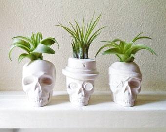 Skull planters, mini air plant skull planter, top hat skull, pirate skull, monocle, mustache