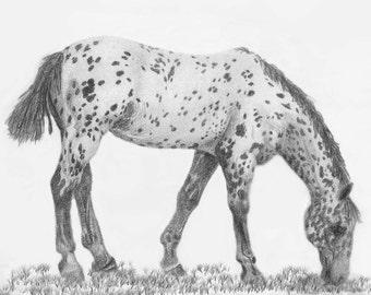 "Horse Stationary ""Appaloosa foal"""