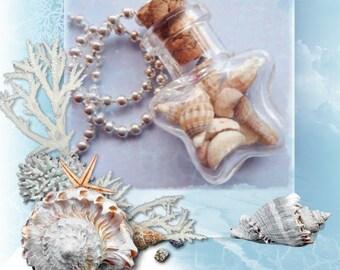 Tiny Dalmatian Sea Shells Star Bottle Necklace