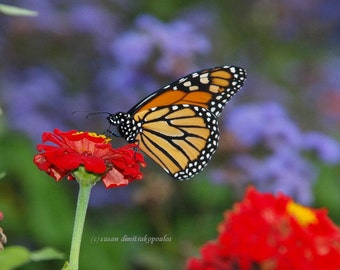 Last Visit, Monarch Butterflies, blank card, friendship, thinking of you, write own msg