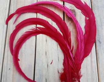 Red Rooster Tail Feathers