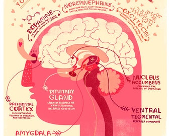 Your Brain in Love: Anatomy Poster