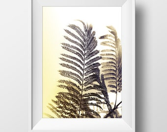 Printable Photography, Minimal Photograph PRINTABLE, Fern Leaves, 11.7 x 16.5 in. black and white with soft sunlight tones, Fern print