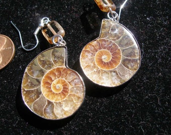Ammonite fossil earrings, small glss bead  -  Witches of etsy, paganteam, OlympiaEtsyTeam, WWWG, SupportingArtists