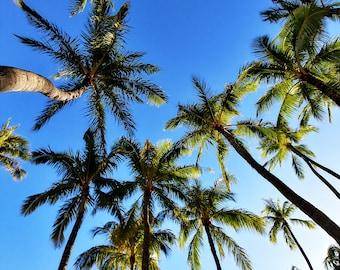 Palm tree sky Photography print