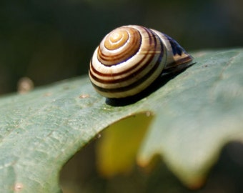 Snail and Leaf