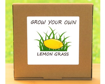 Unusual Windowsill Gardening Gift - Grow Your Own Lemon Grass Plant Kit