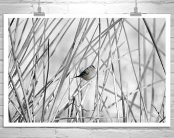 Sparrow Bird Art, Black and White, Nature Photography, Bird Print, Bird Photograph, Wildlife Art, Wetlands, Gift for Bird Lover, Canvas Art