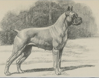 "Matted Vintage Dog Print ""Boxer"" by Edwin Megargee C. 1942 Vintage Decor 8x10"""