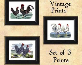 Vintage Chickens Prints - Roosters and Hens ~ Set of Three Prints ~ Kitchen Decor ~ Cottage Chic ~ Farm Prints ~ Poultry decor