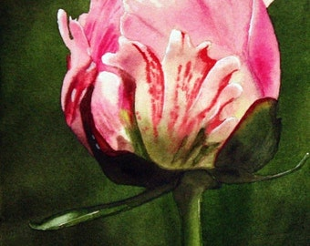 Tulip Painting Print, Watercolor, Fine Art, Home Decor, Floral, Flower, Realism, 5 x 7, Flower Painting, Watercolor Painting, Art Print