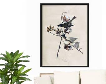 Vintage Bird Print - Farmhouse Decor - Rustic Decor - Kitchen Print - Wall Art Print - Bird Illustration Print - Poster - Large Bird Print