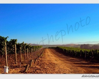 Landscape Photography-Napa Vineyard