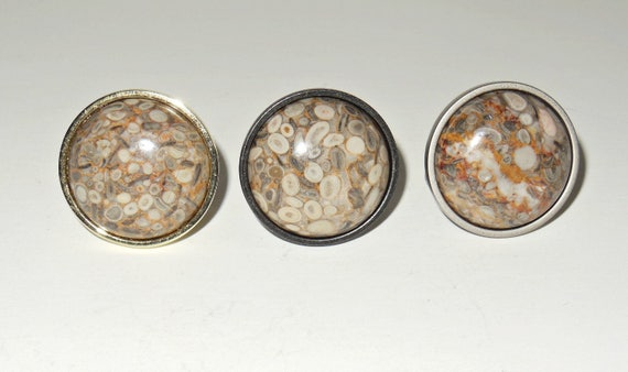 CRINOID FOSSIL Cabinet Stone Knobs Stone Pulls Home Décor