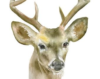 Deer Buck Watercolor Painting 11x14 Giclee Print Reproduction - Eight Point Buck - Woodland Nursery Art