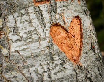 Heart Carved Into a Tree Photograph