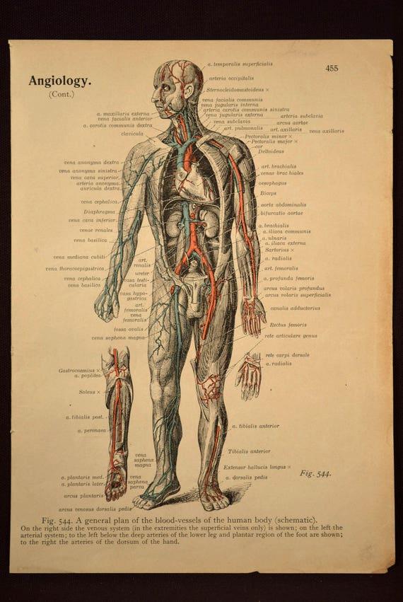 Anatomy Print Human Body Wall Art Medical Wall Decor Print