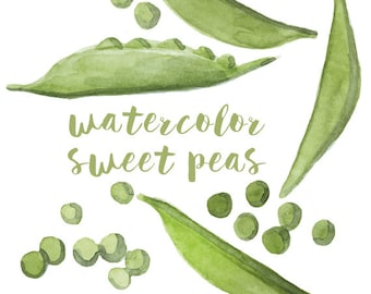 Watercolor Sweet Peas, Sweet Pea Clip Art, Pea Clipart, Veggie Clipart, Culinary Clip Art, Food Clipart, Sweet Peas Clip Art, Food Art