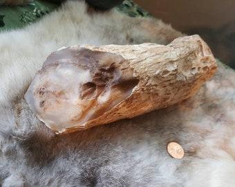 Huge Petrified Wood Limb Cast/Agatized Limb cast/Fossilized Wood/Pet wood/Petrified Log/Opalized Wood/Metaphysical Healing/Lapidary Supply