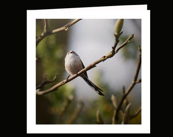 Fine art handmade blank photo birthday, greetings card featuring a long-tailed tit sitting on a branch