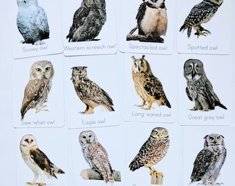 Owl flash cards - types of owl study cards - classroom decor - nursery decor - owl decor - Montessori - educational gift