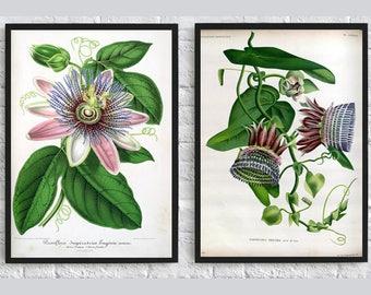 Purple flowers print Botanical illustration print flowers print nature art wall art decor dorm room decor living room decor poster set of 2
