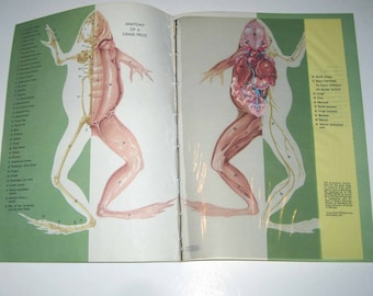Vintage Illustrated Transparency Book Pages of The Anatomy of a Grass Frog