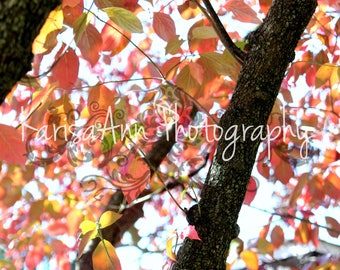 Nature photography, Tree photography, Leaves, Fall photography