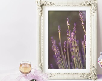 Lavender Picture, Purple floral photo, wildflower picture, fine art photography, floral nursery print, gift for mom, nursery photograph
