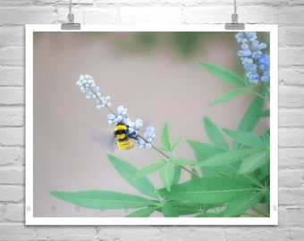 Bee Photograph, Bumble Bee Gift, Bee Picture, Cute Bugs, Insect Art, Art Print with Bee and Flowers, Garden Photography, Sonoran Bumble Bee