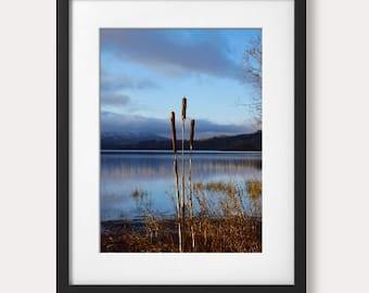 Standing Tall, Glenade Lake, Co. Leitrim, Ireland