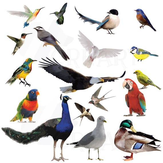 Watercolor Birds Clipart Pack Vectors For Commercial Or